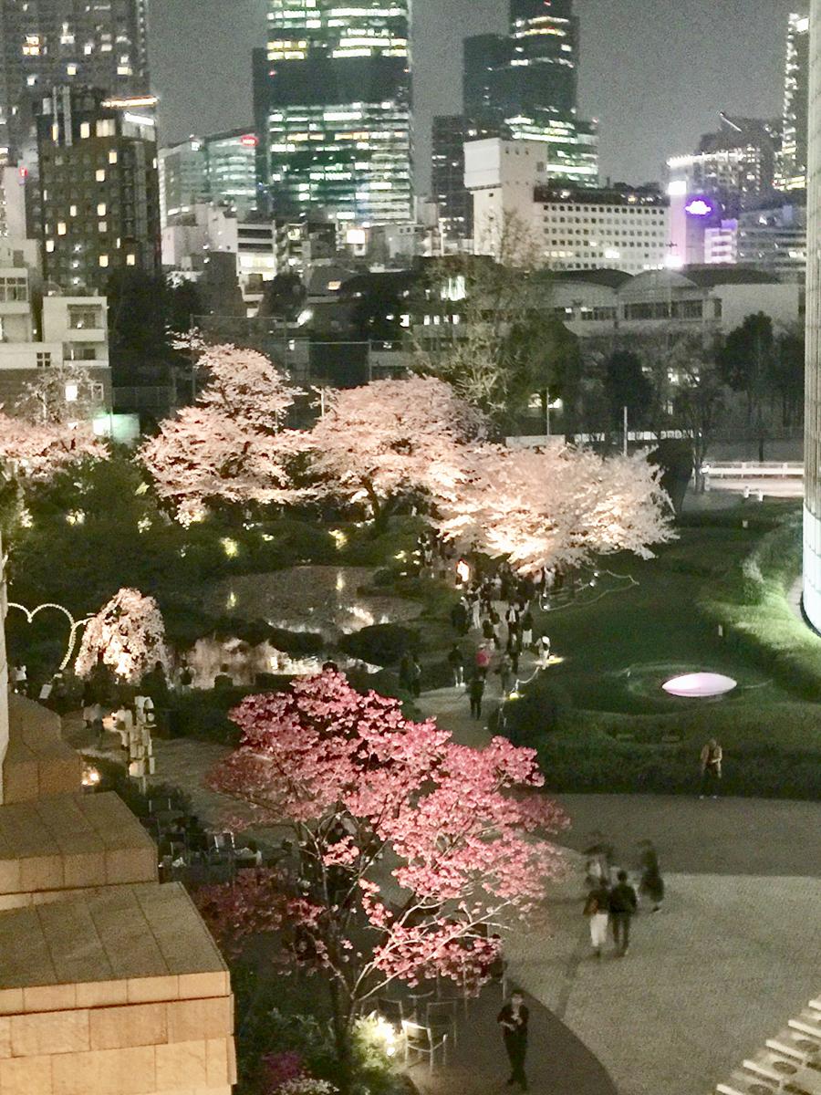 cerisiers dans la ville-1