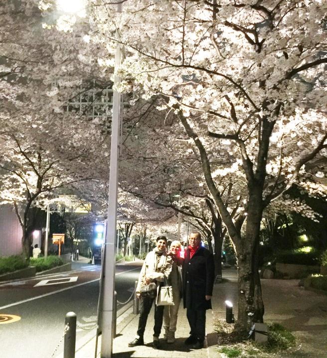 cerisiers dans la ville-4