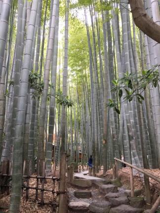HOKOKU-JI TEMPLE FORER DE BAMBOUS
