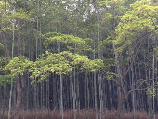 Le Tenryu Ji-bambou