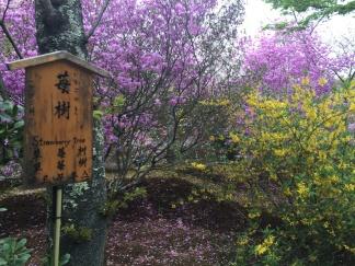 Le Tenryu Ji-jardinu