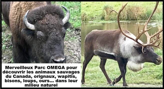 OMEGA-4.jpg